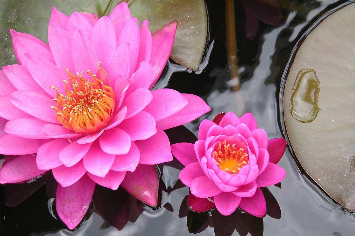 Nimet Erenler Gülkökü Sosyolog-Zen Eğitmeni